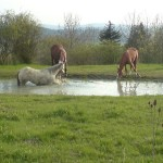 Der große Pferdepool